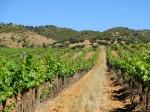 Alentejo Wine Country