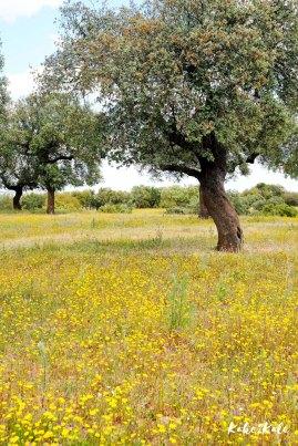 Kake2Kale Alentejo Countryside (Portugal)